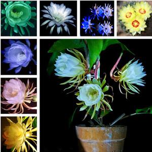 Yeni Geliş 2019! 100 ADET Epiphyllum Çiçek Tohumları Bonsai Nadir Orkide Kaktüs Tohumları Ev Bahçe Dekorasyon Bitki Büyümeye Kolay Ücretsiz Kargo