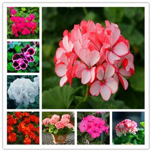 100 Pcs Colorful Bonsai Geranium Flower Rare Variegated Geranium Bonsai Potted Indoor Rooms Home Garden Flower For Bonsai Plant