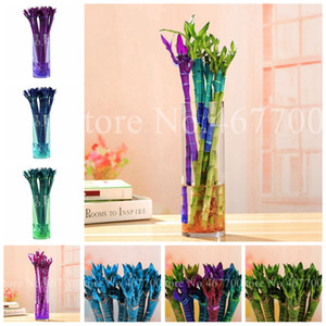 Hot Sale 50 pcs  bag Seeds Rainbow Bamboo Bonsai Outdoor Lucky Moso Tree Plant For Home & Garden Decoration Potted Plants Easy to Grow