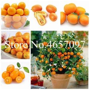 30 pcs Vente Hot Kumquat Bonsai graines orange Balcon Patio pot Beaucoup d'arbres fruitiers savoureux Juicy orange plante pour la maison et le jardin Plantation
