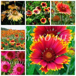50 pcs  bag Rare Gaillardia Pulchella Indian Gorgeous Bonsai Potted Perennial Chrysanthemum Flower Garden Plant Easy to Grow