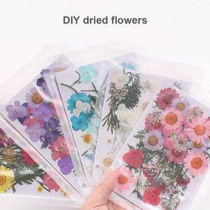 Главная Сад Горячей продажи Прессованного цветок Mixed Organic Природного сушеных цветы DIY Art декор коллекция подарки Лучшей цена