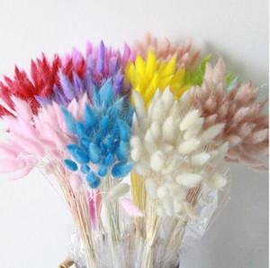 Flores secas naturales colorido Lagurus Ovatus verdadero ramo de flores para el hogar decoración de la boda conejo cola cola Bunch GB157