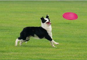 لينة طوي الحيوانات الأليفة الكلاب لعب تحلق قرص التدريب سيليكون لينة لعب الحيوانات الأليفة مستلزمات تدريب الكلاب