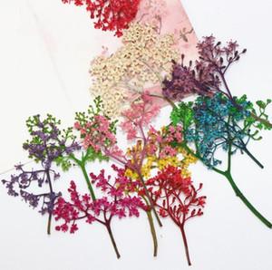 120 шт. Сухих цветов сохранились adnate старшая трава для эпоксидной смолы изготовления ювелирных изделий открытка рамка телефон чехол ремесло DIY