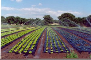 high quality and good price for sales of agriculture film