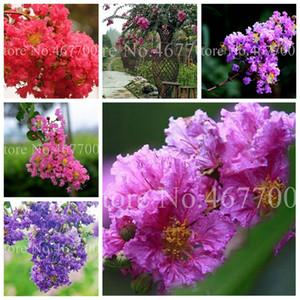 200 Pcs  Bag Seeds Crape Myrtle Lagerstroemia Indica 'Natchez' Perennial Flower Bonsai Courtyard Myrtle Flowers Home Garden Plant Pot
