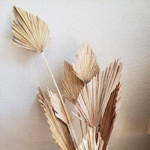 Palm Fan foglia secca naturale del fiore secco di foglia di palma Fan partito pianta di arte di DIY Wall Hanging Wedding Decor