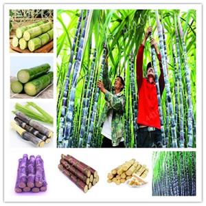 grosses soldes! 100 pièces de bonsaïs de canne à sucre coloré légumes arc-en-naturels pour les vitamines médicinales du jardin à la maison énorme chew douce