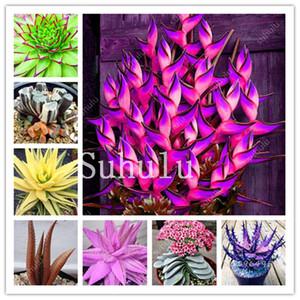¡Promoción! 200 PC semillas de Aloe Vera raras Bonsai color perfecto hortalizas de fruto comestible de belleza comestibles Plantas suculentas para jardín