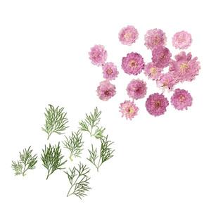 Set 20pcs premuto foglia secca del fiore per i monili del telefono Caso Biglietti di auguri fai da te