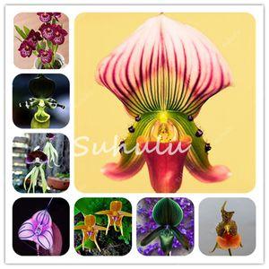 500 pezzi Borsa Orchid Flores Seeds, Rare Orchid Bonsai Scimmia Unique Monkey Face Flower Plantes Natural Growth Flower Bonsai per la casa Giardino