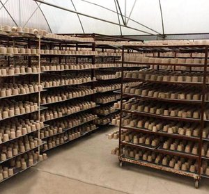 8 * 8cm Garden Semenzaio Pulp vasi biodegradabili Piantina Raising bicchieri biodegradabili Flower vassoio Raising Coppe 2000pcs LJJK2021