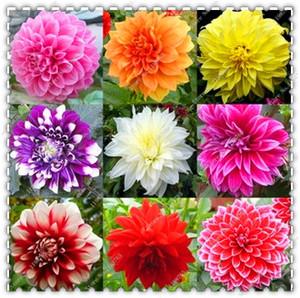 100 pz / borsa rara mixed dahlia semi all'aperto bonsai in vaso balcone splendido fiore fioritura perenne giardino pianta facile da coltivare