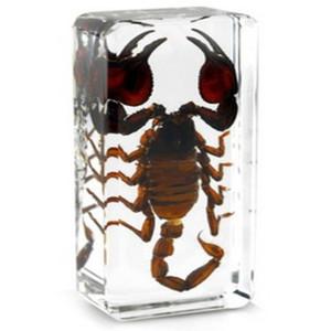 Brown Scorpion Specimen Acrílico Resina Embutido Real Escorpião Ensino BrinquedosPresentes Rato Transparente Paperweight Crianças New Biologia Kits de Ciência