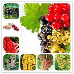 100 Pcs Gooseberry Bonsai Frutas, Juicy Groselha Orgânica fruta doce Bonsai sementes da planta alta Nutritiva Bonsai alimento de planta Para Casa Garden Pot