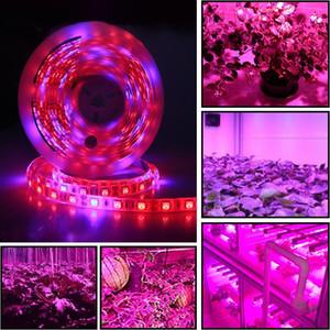 DC 12 V LED büyümek ışık tam spektrum 5 M LED Şerit ışık tam spektrum bitki yetiştirme lambaları bitki büyüme lambaları topraksız sera için bitki yetiştirme