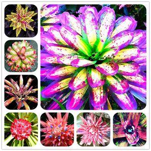 Самых продаваемых 100 шт кактуса Бромелиевые растения редкие красочные цветы бонсай двор мини-завод сочные бонсай DIY Домашний сад семена