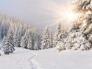 Noël ensoleillé Neige Forêt Arbres Vinyle Photographie Décors Nouveau-Né Bébé Photomaton Arrière-plans pour Enfants Fête D'anniversaire Studio Props
