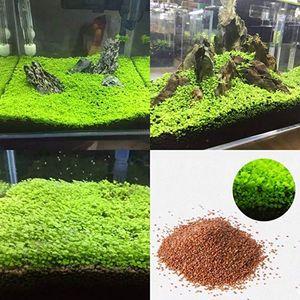 Las semillas al por mayor de jardinería de plantas acuáticas de agua del tanque del acuario hierba ornamental plantar las semillas de Inicio decoración de la yarda no GMO