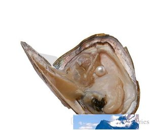 White Pearl extravagante do presente Akoya alta qualidade barata shell pérola de água doce ostra ostra pérola 6-7 mm com embalagem a vácuo