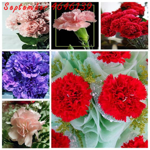 200 Pcs Pack Seeds Rare Carnations Bonsai Flowers Bonsai Dianthus Caryophyllus Flowers Bonsai For Home Garden Planting Mom Gift