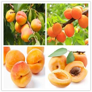5 pezzi semi Bonsai Albicocco pianta in vaso di frutta Planta giardino della casa commestibile Profumi Fruta bonsai varietà
