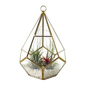 Creativa gotas de agua Diseño Colgante Forma terrario de cristal geométrico moderno suculento de Planter diamante artístico de la pieza central del florero