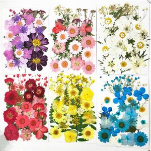 2019 Fiori pressati piccoli fiori secchi Scrapbooking secco Decorazione floreale conservata fai da te Casa Mini bloemen flores secas