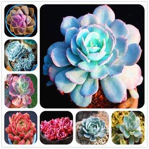 Heißer Verkauf! Blau lotus Sukkulenten 200 Stücke Samen Bonsai Pflanzen Blume Hausgarten Topfpflanzen Saubere Luft Dekoriert Garten Balkon