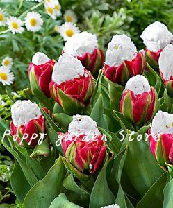 500 PCS Hohe Quatity Blumen Pflanzen Seltenes weißes Eis Tulip Bonsai Pflanze nicht Blumenzwiebeln, Bonsai Balkon Blume für Home Anlage