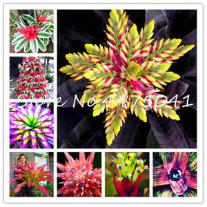 200 Pcs arco-íris Bromélia Tillandsia Bonsai sementes de plantas raras Suculenta Fresh Air planta muito fácil Crescer preguiçosos plantas Bonsai Para Casa Jardim