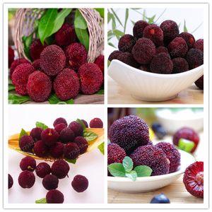 10 pcs graines Arbutus unedo plante arbousier délicieux fruits chinois bonsaïs pour la santé et jardin Easy Grow
