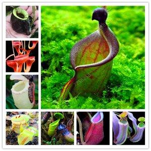 100 جهاز كمبيوتر شخصى Dionaea Muscipula العملاق كليب فينوس صائدة الذباب مزروع الحشرات النبات بونساي بونساي بونساي مصيدة الذباب على حديقة