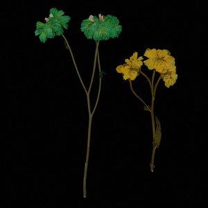 10 Pièces naturel fleurs pressées Daisy Fleurs séchées séchées réel pour le bricolage scrapbooking artisanat QB9M #