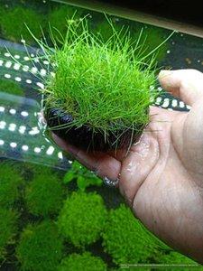 물 잔디 진흙 산소 정화 물해서 양질없이 L3w8O 물고기 탱크 풍경 전망 일반 황소 머리 덩어리 수조 초보자 항아리 잔디