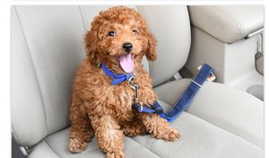 Car pet seat belt good quality fashion safety buckle cost-effective special for dogs adjustable no neck tightening professional safe travel