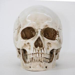 Statues crâne Résine Sculptures Halloween Accueil Décor Artisanat décoratif crâne Taille 1: 1 modèle de vie Réplique de haute qualité