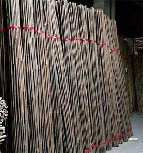 Pleioblastus amarus Bitter полосы контроля упаковка бам вредителей против милдью бамбука бара упаковки бамбука бар вредитель управления по борьбе с плесенью