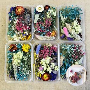 1 Box Assroetd Echt Getrocknete Blumen Gepresste Blätter für Epoxy-Harz-Schmucksachen, die DIY-Zubehör