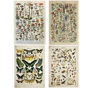 Vintage Adolphe Millot Encyclopedia Posters Butterfly Mushrooms Herbs Flowers Insect Classic Canvas Paintings Wall Stickers