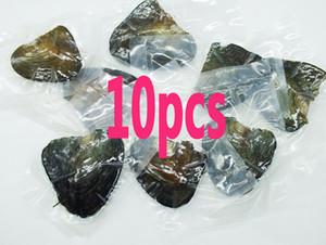 10PCS envío libre, paquete vacío de la ostra perla de agua dulce (ostra perla color no es seguro) de 6mm Perla T200730