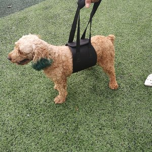 colorful WALK LEASH MESH DOG HARNESS COLLAR PET TRACTION ROPE CHEST STRAP good quality free shipping
