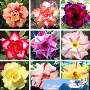 무료 배송 Ranton 정원 30 PC를 혼합 Adenium입니다 Obesum 씨앗 품질 예쁜 사막 로즈 씨 희귀 분재 꽃 씨앗
