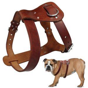 Genuine Leather Dog Harness Brown Real Leather Dogs Walking Training Vest Adjustable Straps Medium Large Pitbull Boxer Mastiff