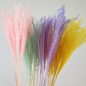 10pcs Wedding decoration pink white pampas grass dried natural phragmites flowers home decor Natural dried bouquet flowers