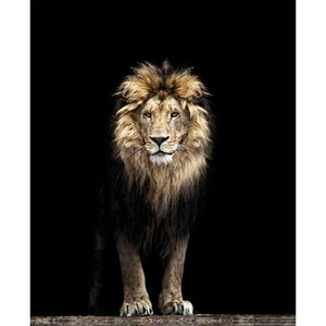 Creative Animal Lion DIY Oil Paint by Numbers for Adults Kids 16x20'' Canvas Painting