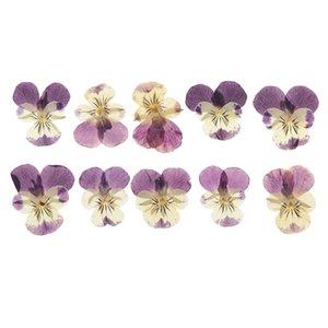 10PC Bella pressato Pansy fiori secchi favore Fiori per arte Scrapbooking del mestiere delle decorazioni regalo artificiale