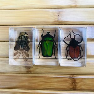 Insect Specimens Clear Paperweight Resin Handicraft Rhinoceros Beetle Insect Figure Model Toys Resin Specimen Kids Education Gift 43x28x21MM