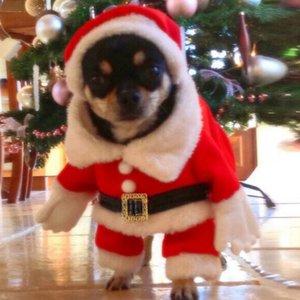 Noel Sevimli Hayvan Giydirme Noel Baba Suit Pet Üç Boyutlu Dönüşüm Giyim Malzemeleri + Şapka